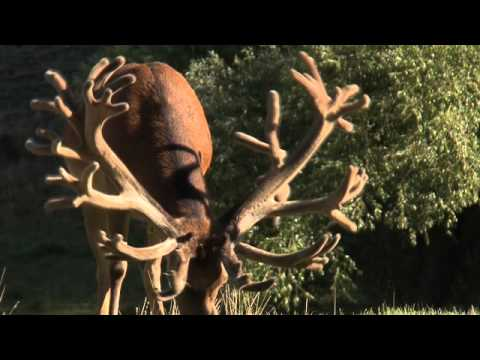 Cardrona Safaris Hunting New Zealand | Stealth Films New Zealand