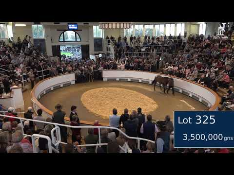 The most expensive yearling sold in the world this year: 3,500,000gns