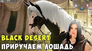 Black Desert Лошади, Ловим, Приручаем, Разводим