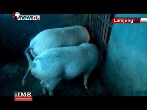 (लमजुङका युवा कृषि उद्यमबाट स्वदेशमै राम्रो आम्दानी गर्दै....118 sec)