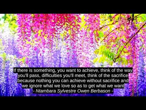 Success quotes - Cindy Ann Peterson 4 Top Motivation Quotes