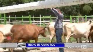 WAPA reseña la producción y comercialización de ganado y carne Grassfed de CaboRojo Steaks