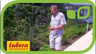 Die Vorteile von Szechuan Pfeffer - erklärt von Chris Smith, der Gründer von Pennard Plants