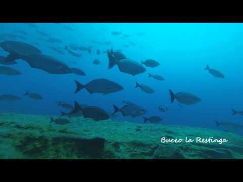 Vídeo de Buceo la Restinga, Agosto 2013