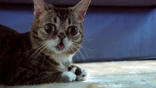 Video Try Not To Laugh Challenge - Funny Cats! MP3, 3GP, MP4, WEBM, AVI, FLV Agustus 2017