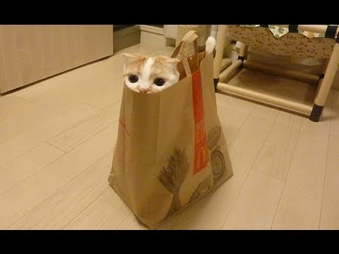 """Playing cat inside the bag, Cute."" Image"