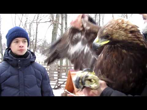 Кремлёвские птахи: беркут и говорящий ворон поселились на Соколином дворе