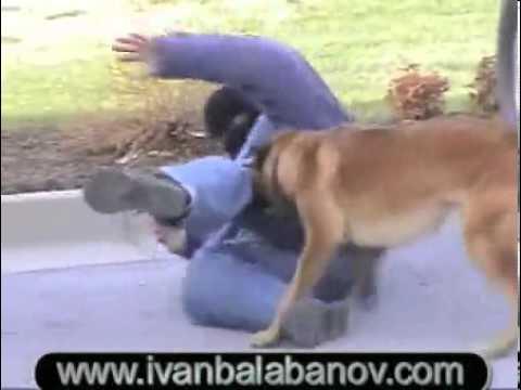 protection dog