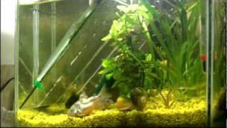 Acvariu mic 12 ore in 5 minute timelapse aquarium