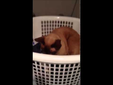 Funny cat on the washing machine.