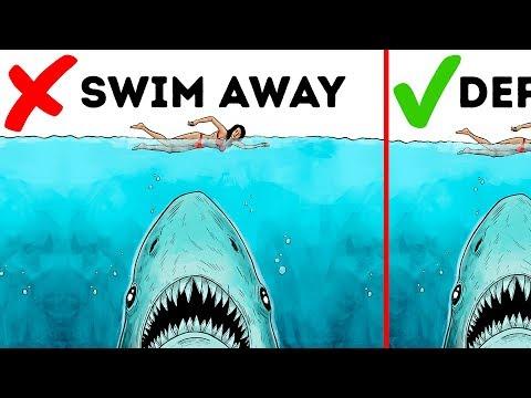 10 Easy Ways to Survive a Wild Animal Attack