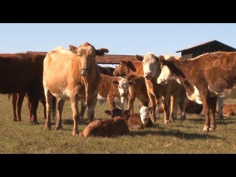 Vídeo Sistematização: CITE 122 - Programa Rio Grande Rural