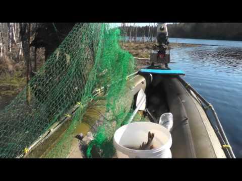видео рыбалка мережами