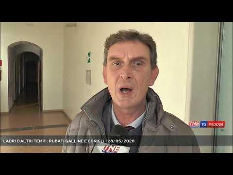 LADRI D'ALTRI TEMPI: RUBATI GALLINE E CONIGLI   28/05/2020