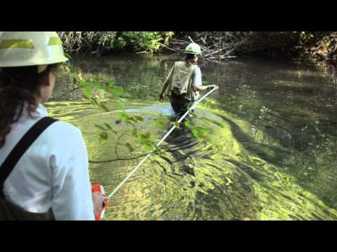 Find Your Path: Hydrologist