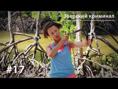 Зверский криминал: медоеды, павианы и крокодилы (18+)
