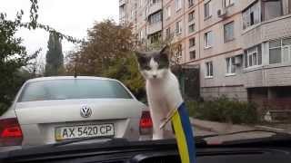 Η γάτα και ο υαλοκαθαριστήρας