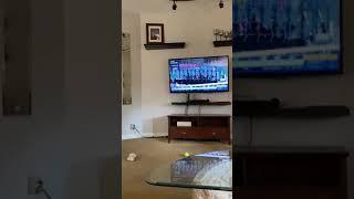 Pies rozwalił system podczas oglądania wyścigów w telewizji