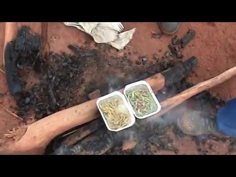, title : 'готовим кузнечиков/ кузнечики/ экзотические блюда/насекомые/съедобные насекомые/подножный корм/еда.'