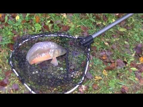 Обзор о рыбалке за 14 октября 2017