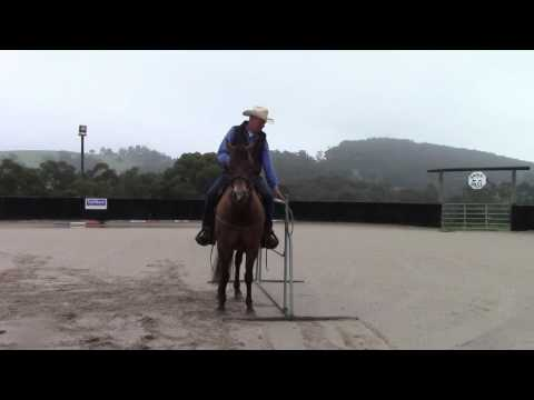 Western Trail Class & Equitation Class training