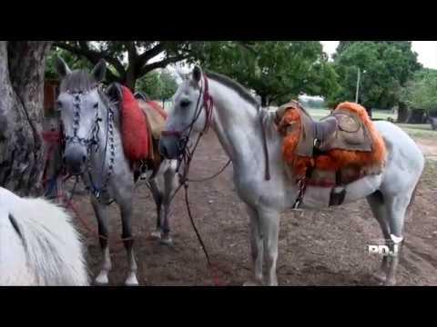 Le Pantanal à cheval