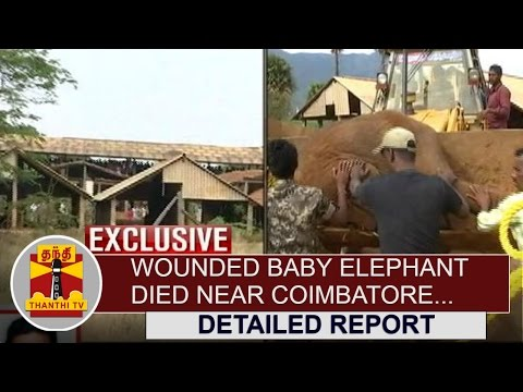 Detailed-Report--Wounded-Baby-Elephant-died-near-Coimbatore--Thanthi-TV