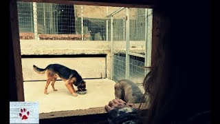 An odd couple - love in a dog shelter by The Orphan Pet