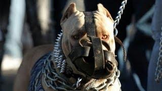 Video ABC Canino Pitbull Terrier Americano Español MP3, 3GP, MP4, WEBM, AVI, FLV Desember 2017