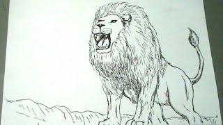 Download Video Cmo Dibujar Un Len  How To Draw a Lion