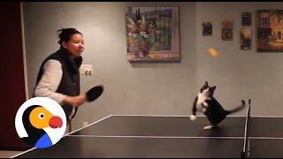 「猫と卓球したらどうなるか?」 できあがった映像に、笑顔あふれる