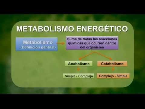 Calorimetría y Variantes Metabólicas