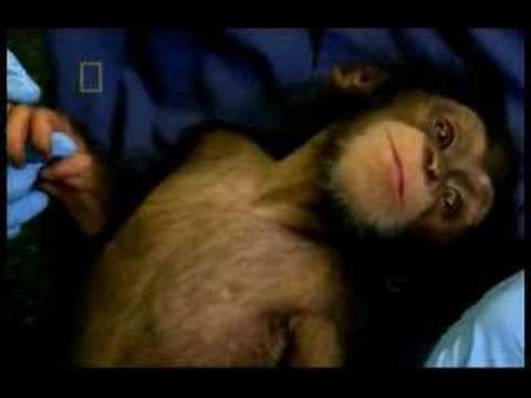 Ape - Humans are apes. Great apes. Apes all belong to the superfamily Hominoidea. The great apes are the family Hominidae which we share with the Chimpanzees, Gori...
