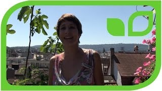 #1311 Der Terrassengarten von Sabine Reber