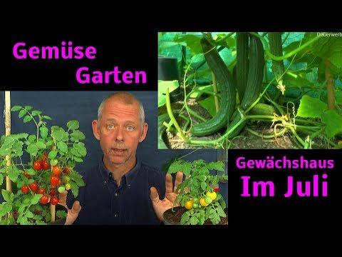 Garten im Juli Gurken und Tomaten aus unserem kleinen Garten Gewächshaus