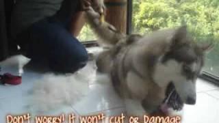 ║█ ▌► FURminator Dog Grooming ◄▌█║