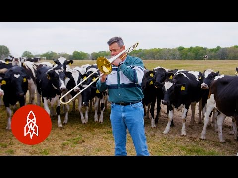 Who Knew Cows Loved Jazz?