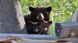 Be Bear Aware Community Forum