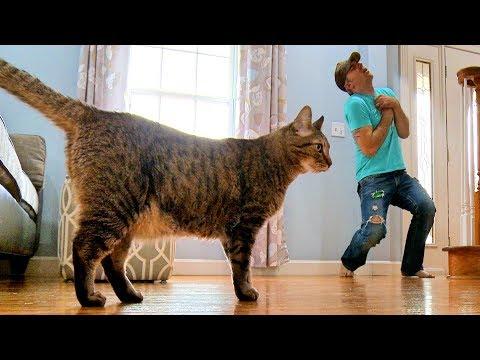 Mies teeskentelee kuolevansa – Katso kissan reaktio