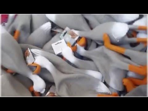 La mejor recopilación de Duck Army ¡Brutal!