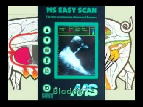 MS Easy scan ENG