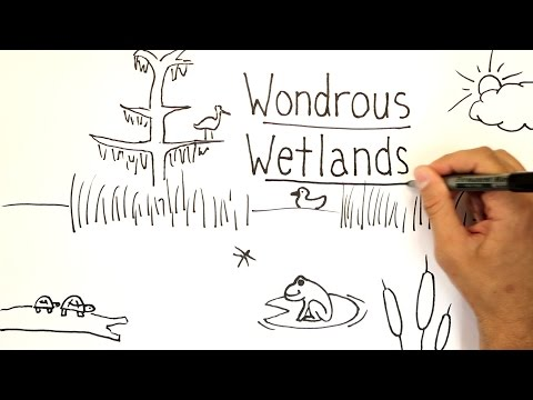 Wondrous Wetlands | Whiteboard