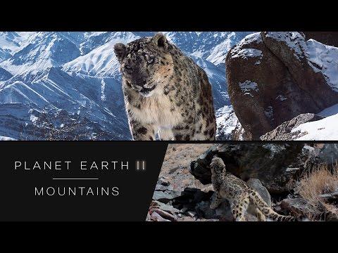 已經愈來愈難被發現的雪豹終於被捕捉到完整影像紀錄,看到牠現身的那一秒大家都忘記呼吸了!
