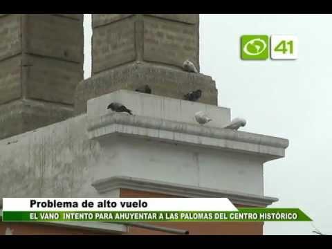 Eliminar palomas mi techo videos videos relacionados for Ahuyentar palomas del balcon
