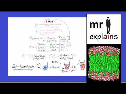 mr i explains: The Role of Lipids / Triglycerides and Phospholipids / The Emulsion Test