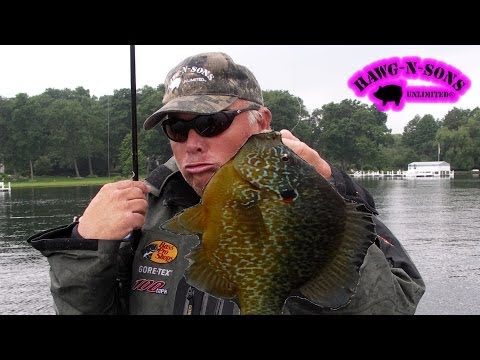 BEST Fishing BIGGEST Pumpkinseed Sunfish Fish Ever – Bluegill Panfish