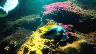 Timmendorfer Strand Germany  city pictures gallery : SEA LIFE Aquarium | Timmendorfer Strand 2016 | HD Holidays |