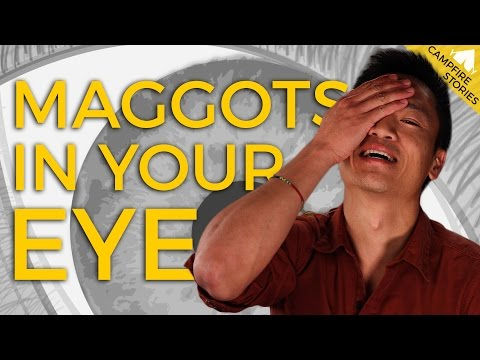 What to do When There are Maggots in Your Eyeball | National Geographic