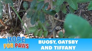 Bunny rescue under fire(works) - Please keep your pets safe this 4th of July! by Hope For Paws