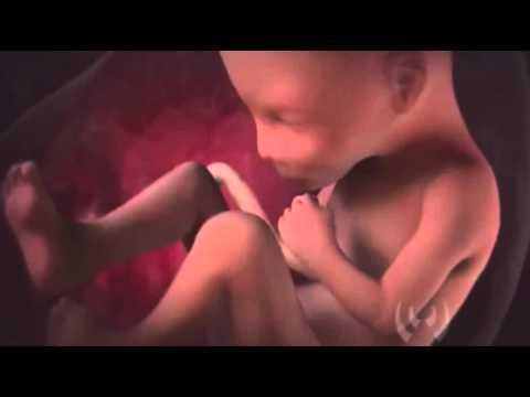 Psicologia prenatal